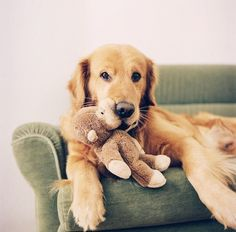 Just a dog and his monkey :)