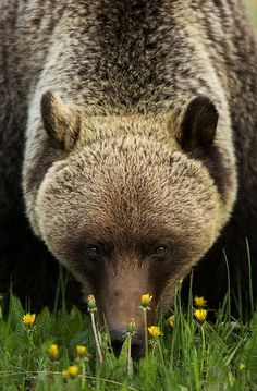 A bear among a field