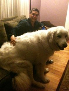 that's a huge dog!