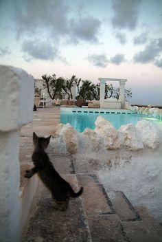 Masseria Cimino  #swimmingpool #architecture #design #italy #puglia #resort