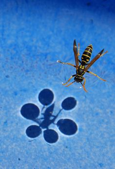 Amazing Example Of Surface Tension