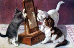 Kittens looking in a mirror.