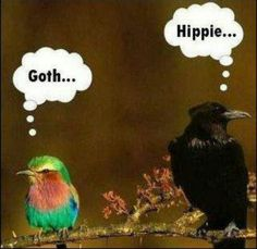 Lol anim, laugh, stuff, hippie, goth, funni, humor, birds, thing