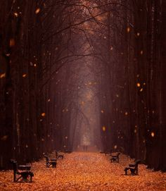 Path of Autumn