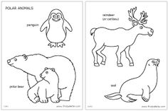 Polar animals coloring page and printables for standing animals...