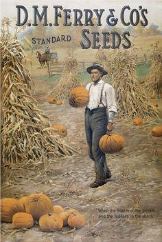 Ferry Seeds
