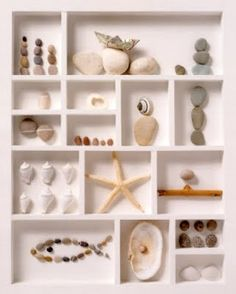 Shell display. I need some way to display my shells I've collected from different beaches. Plastic baggies laying around just isn't working anymore