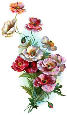 vintage poppies temporary tattoo mothers day by pepperink on Etsy