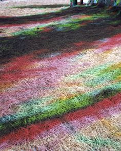 #thinkcolorfully multi-shadow grass