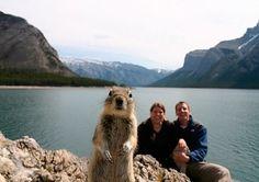 Photo bombing squirrel.