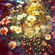 70's Flowers