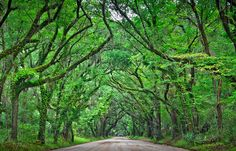 botany bay road. edisto island, sc.