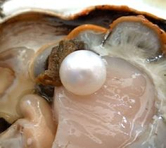 EXPERIENCE THE THRILL OF PEARL DIVING | Dubai Confidential