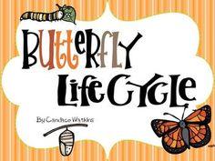 classroom, idea, school, butterflies, cycl unit, life cycles, butterfli life, mini unit, scienc