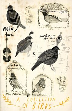 kattfrank:  A collection of birds.