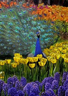spring flowers, sea, flower fields, flower beds, rainbow colors, feather, flowers garden, peacock, wild birds