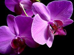 PHONG LAN TIM by lazu60, via Flickr