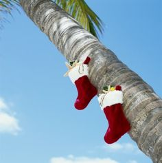 #Christmas in #Paradise