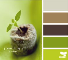Strong greens and brown are perfect website accent colors. Personally, I would add a blue accent to the mix to round it out.