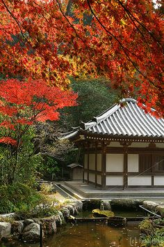 Japanese Fall, a wonderful time to go and see the beautiful colors of the trees. Chinkokuji Temple, Fukuoka, Japan