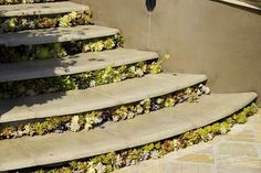 succulents in stairs
