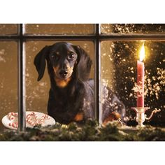 Dachshund waiting for Santa .....