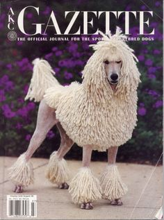 corded poodle