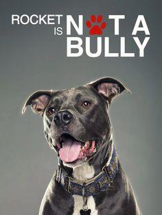 #Pit #Bulls are NOT Bullies!