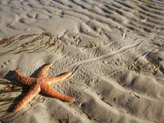Took this in Powell River BC...Starfish Tracks...