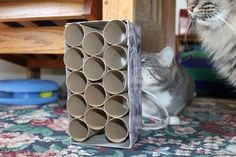 fourwhitepaws: new toy crazy cats, anim, cat toys homemade, toilet paper rolls, homemade cat toys, pet, catstuff, cat stuff, diy