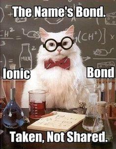 I love Chemistry Cat!
