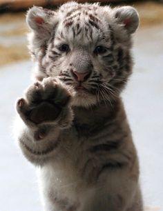 Awwww..so cute.