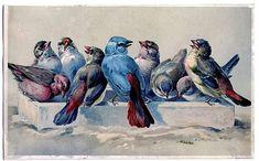 blue birds at the bath
