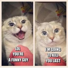 You're Funny.. | Cat Meme