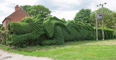 English Gardener Grows Dragon in Front Yard.  Headline sez it all. That is awesome!