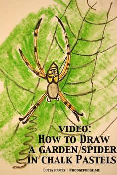 How To Draw A Garden Spider With Chalk Pastels