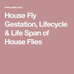 House Fly Gestation,