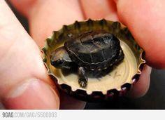 Turtle! wild thing, anim, cutest pictur, creatur, turtles, ador, babi turtl, tini turtl, super tini