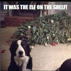 It was the Elf on the Shelf