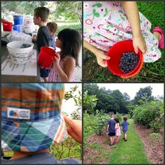 berry picking - what a great tradition.  Someone recently told me they have a yearly tradition of berry picking on father's day when the berries are at their peak.
