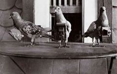 Aerial Photography Before Drones?