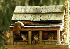 And now I want to build a squirrel sized log cabin.