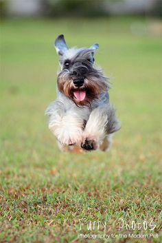 I would leap tall buildings in a single bound.                                Jack: the wonder dog
