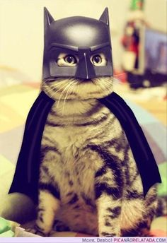 Batcat...this just made my day.