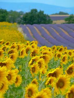 This is why we love Provence, France. Beautiful landscapes and fragrances