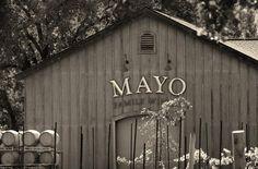 Mayo Family Winery