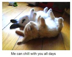Bunnies getting ready for rollup!  :-)