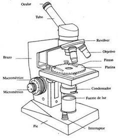 Esquema de un microscopio óptico