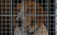 Pet Food Reserves at