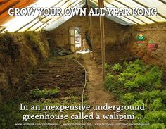A walipini greenhouse can be built at a cost of $250 - $300